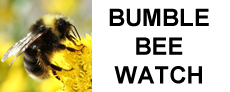 Bumble Bee Watch logo